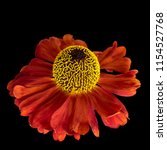 still life fine art floral...   Shutterstock . vector #1154527768