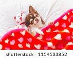 Cute Chihuahua Puppy Sleeping...