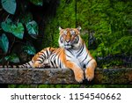 Beautiful Bengal Tiger With...