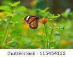 Monarch Butterfly On Lantana...