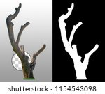 tree trunk isolated on... | Shutterstock . vector #1154543098
