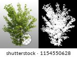 shrub in summer isolated on a... | Shutterstock . vector #1154550628