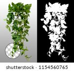 climbing plant in summer on... | Shutterstock . vector #1154560765