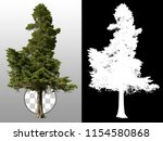 Pine. Tree Isolated On...