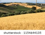 panoramic view of olive groves  ... | Shutterstock . vector #1154644135