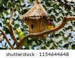 the gouldian finch  erythrura... | Shutterstock . vector #1154644648
