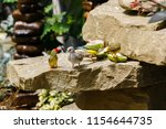 the gouldian finch  erythrura... | Shutterstock . vector #1154644735