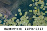 aerial view of pond with yellow ... | Shutterstock . vector #1154648515