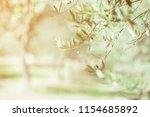 olive trees. olive trees garden.... | Shutterstock . vector #1154685892