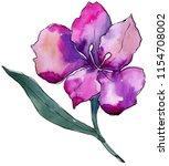 watercolor colorful... | Shutterstock . vector #1154708002