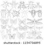 Set Book Coloring Insects...