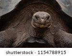 Galapagos Giant Tortoise Head...