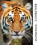 beautiful close up portrait of... | Shutterstock . vector #1154867698