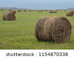 Cut And Rolled Hay Bales