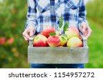 woman picking ripe organic...   Shutterstock . vector #1154957272