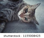 cat lying down on the cement... | Shutterstock . vector #1155008425