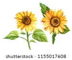 watercolor illustration ... | Shutterstock . vector #1155017608