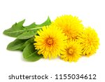 dandelion flowers with leaves... | Shutterstock . vector #1155034612
