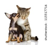 Stock photo the puppy kisses a cat isolated on white background 115517716