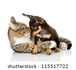 Stock photo puppy with a cat look at each other isolated on white background 115517722
