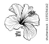 hawaiian hibiscus fragrance... | Shutterstock .eps vector #1155256162