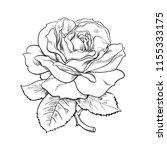 black and white rose flower... | Shutterstock .eps vector #1155333175
