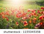 blooming poppy field on a sunny ...   Shutterstock . vector #1155345358