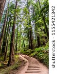 hiking trail going through... | Shutterstock . vector #1155421342