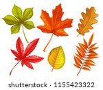 set autumn leaves maple  oak ... | Shutterstock .eps vector #1155423322