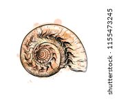nautilus shell section isolated ... | Shutterstock .eps vector #1155473245