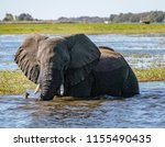 adult elephant stands in river... | Shutterstock . vector #1155490435