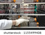 the woman researcher open and... | Shutterstock . vector #1155499408