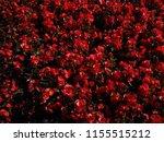 red flower arranged in lotus... | Shutterstock . vector #1155515212