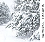 Winter Landscape. Pine Branch...