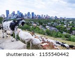 goats eating up weeds in a... | Shutterstock . vector #1155540442