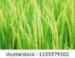 beautiful view of rural green... | Shutterstock . vector #1155579202