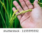 close up of young man hand... | Shutterstock . vector #1155595552