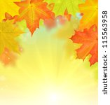 golden and red autumn maple... | Shutterstock . vector #115563958