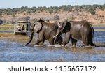 chobe  botswana   july 22  2018 ... | Shutterstock . vector #1155657172
