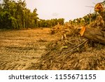 forests that were invaded by... | Shutterstock . vector #1155671155