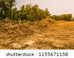 forests that were invaded by... | Shutterstock . vector #1155671158