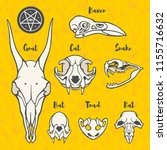hand drawn anatomic  halloween... | Shutterstock .eps vector #1155716632