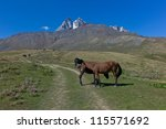 horses  caucasus mountains ... | Shutterstock . vector #115571692