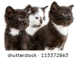 Stock photo closeup three small kitten isolated on white background 115572865
