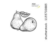 hand drawn whole pears. vector... | Shutterstock .eps vector #1155733885