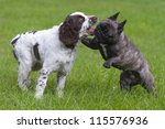 dogs playing - stock photo