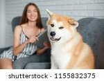 funny dog akita inu looking at... | Shutterstock . vector #1155832375