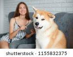 funny dog akita inu looking at... | Shutterstock . vector #1155832375
