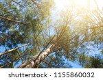 trees   sunshine and blue sky   ... | Shutterstock . vector #1155860032