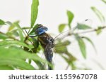 Odonata Is Sitting On A Green...
